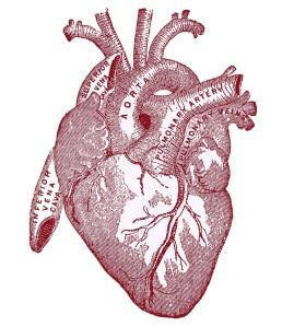 heart-vintageanatomy